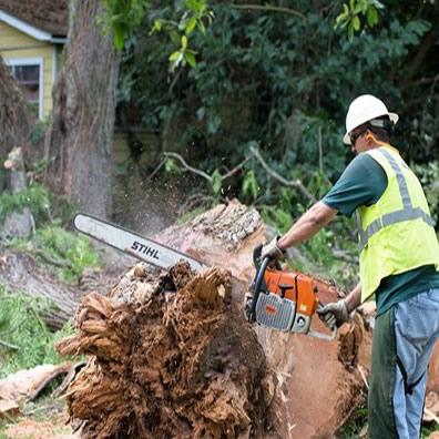 tree removal Netherton