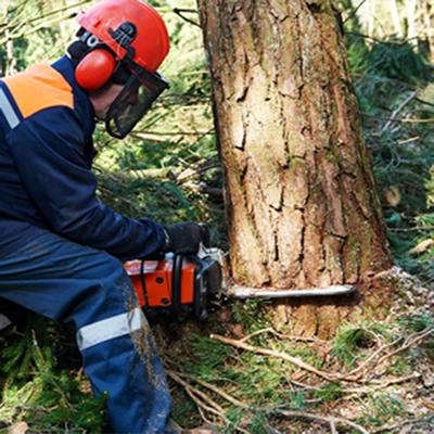 tree removal Glasgow