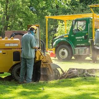 tree stump removal Glasgow