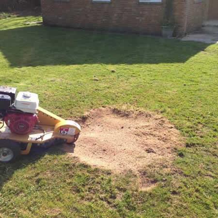 tree stump removal Motherwell