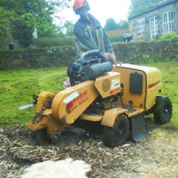 tree stump removal Netherton