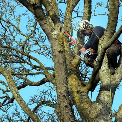 tree surgeon Netherton
