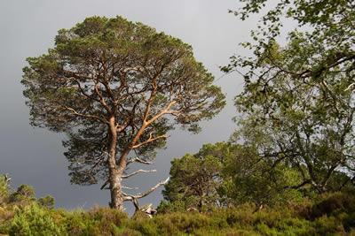 Trees Glasgow Scotland