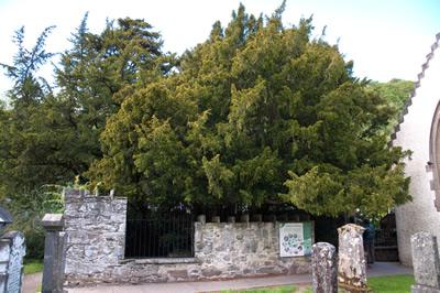 Trees Carfin Scotland